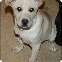 Adopt A Pet :: Lola - Westfield, IN