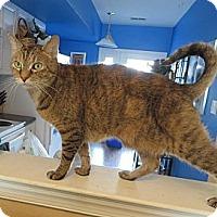 Adopt A Pet :: Lola - Gaithersburg, MD