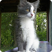 Adopt A Pet :: Party Cloudy - Dover, OH