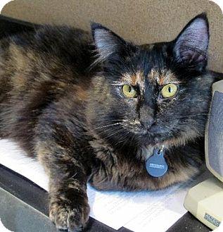 Domestic Mediumhair Cat for adoption in HILLSBORO, Oregon - TiGi