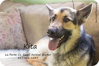 German Shepherd Dog Dog for adoption in La Porte, Indiana - Kita