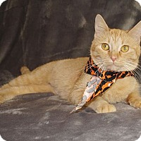 Domestic Shorthair Cat for adoption in Jackson, Mississippi - Maria