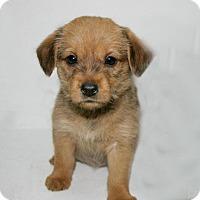 Adopt A Pet :: Tippy - Lufkin, TX