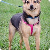 Adopt A Pet :: Abby - Bristol, TN