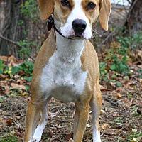Adopt A Pet :: Bonnie - Oakland, NJ