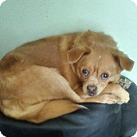 Adopt A Pet :: Max - Northumberland, ON