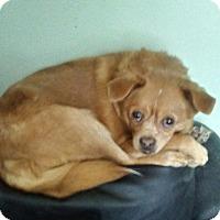 Adopt A Pet :: Max - Treton, ON