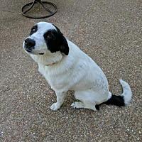 Adopt A Pet :: Felicia/CP - Columbia, TN