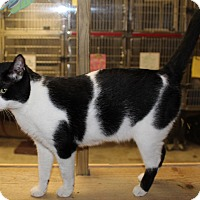 Adopt A Pet :: KENNY - Hopkinsville, KY