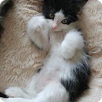 Adopt A Pet :: Dinah - Herndon, VA