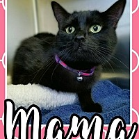 Adopt A Pet :: Mama - Edwards AFB, CA