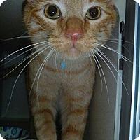 Adopt A Pet :: Baba - Hamburg, NY
