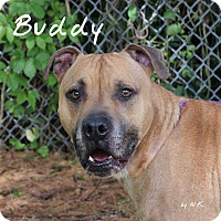 Adopt A Pet :: Buddy - Pleasantville, NJ