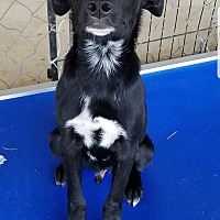 Adopt A Pet :: Brodie pending adoption - East Hartford, CT