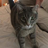 """Adopt A Pet :: """"Cat"""" - A Special Girl - Sedalia, MO"""