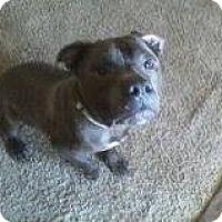 Adopt A Pet :: Frodo - Alliance, NE