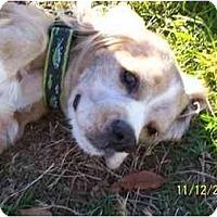 Adopt A Pet :: Burt - Wapwallopen, PA