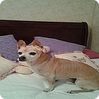 Adopt A Pet :: Taz-URGENT! - Arenas Valley, NM