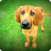 Adopt A Pet :: Josie - Gadsden, AL