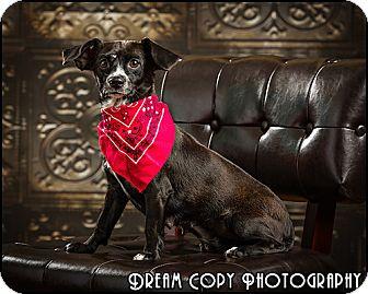 Dachshund Mix Dog for adoption in Owensboro, Kentucky - Bess