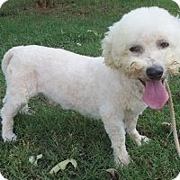 Adopt A Pet :: Casey Jones - Greenville, RI