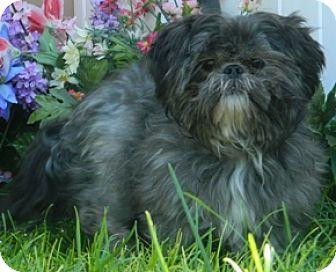 Terrier (Unknown Type, Small) Mix Dog for adoption in Columbus, Nebraska - Kipper