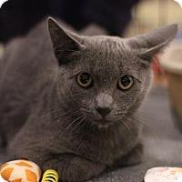Adopt A Pet :: Moose - Sacramento, CA