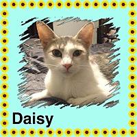 Adopt A Pet :: Daisy - Brentwood, NY