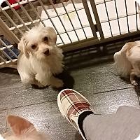Adopt A Pet :: Leo - Santa Ana, CA