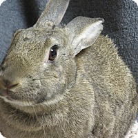 Adopt A Pet :: Priya - Newport, DE