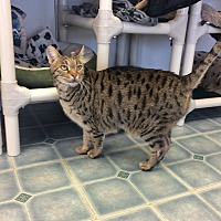 Adopt A Pet :: Tabitha - Elliot Lake, ON