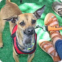 Adopt A Pet :: Turk - Yuba City, CA
