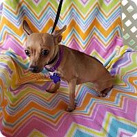Adopt A Pet :: Zambia - Hamilton, ON