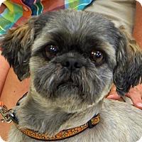 Adopt A Pet :: Bandit - Sprakers, NY