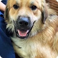 Adopt A Pet :: Rylan - BIRMINGHAM, AL