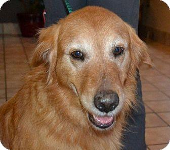Golden Retriever Dog for adoption in Foster, Rhode Island - Beau
