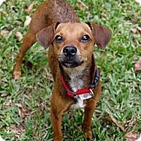 Adopt A Pet :: KiKi - Baton Rouge, LA