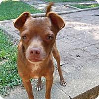Adopt A Pet :: Chip - Charlotte, NC