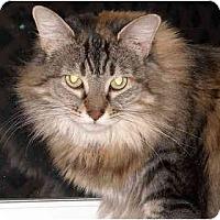 Adopt A Pet :: Muffin - Elkton, MD