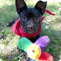 Adopt A Pet :: Duckie - Mocksville, NC