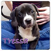 Adopt A Pet :: Tressa - Baton Rouge, LA