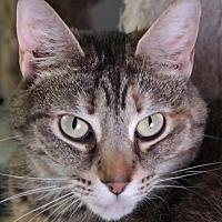 Adopt A Pet :: Masseuse - Trevose, PA
