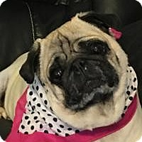 Adopt A Pet :: Sassy - Princeton, KY