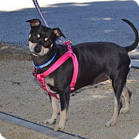 Adopt A Pet :: Kiki - Simi Valley, CA