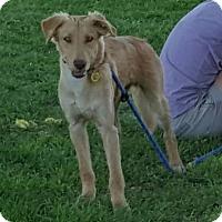Adopt A Pet :: Jackson - Las Cruces, NM