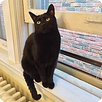 Adopt A Pet :: Brody - Toronto, ON