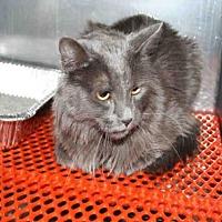 Adopt A Pet :: PERSEUS - Aurora, IL