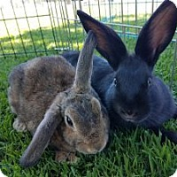 Adopt A Pet :: Diana & Aurora (Bonded Pair) - Encinitas, CA