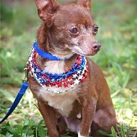 Adopt A Pet :: Martha Washington - Fayetteville, GA