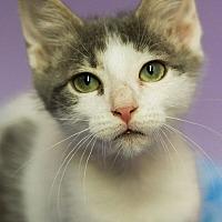 Adopt A Pet :: WAFFLE-DON'T WAFFLE-ADOPT - Plano, TX